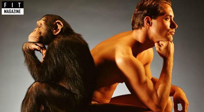 От обезьяны к человеку