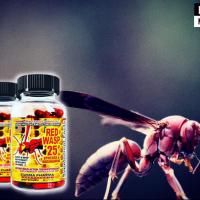 Жиросжигатель Red Wasp – отзывы